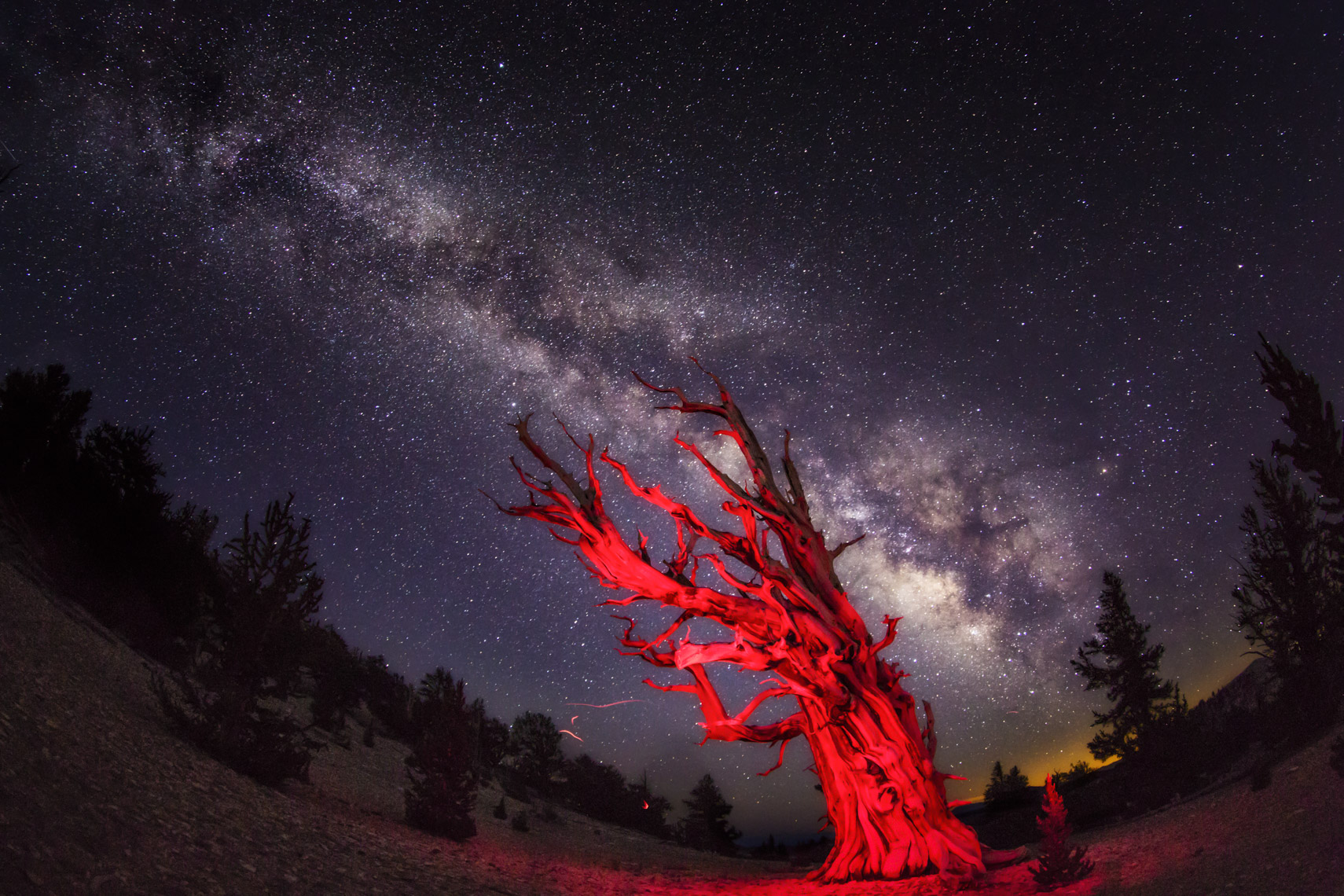 Milk way over light painted  bristlecone pines