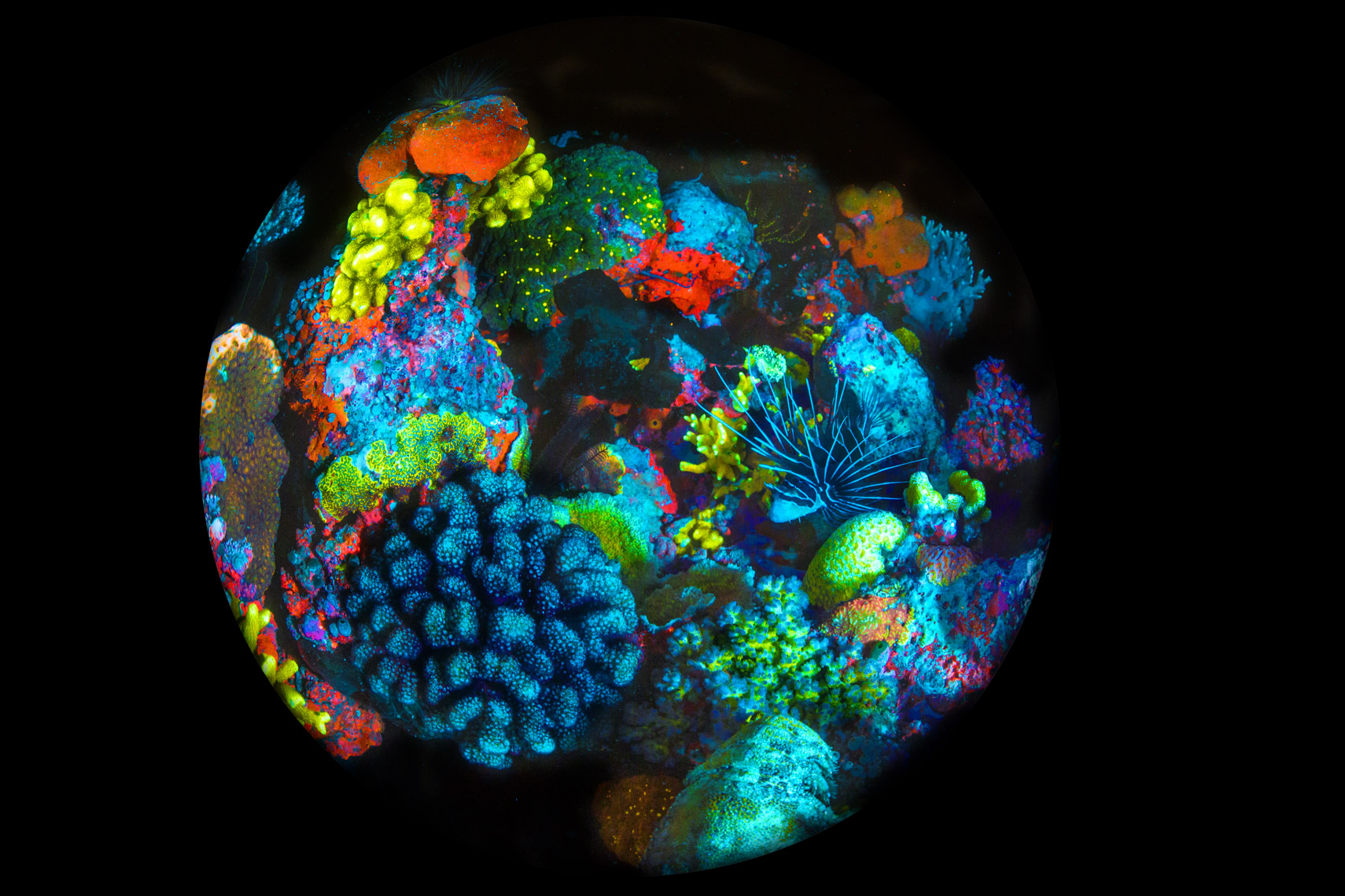 Mixed  fluorescent corals