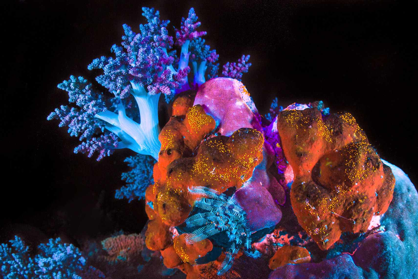 Fluorescent sponge and copepodes