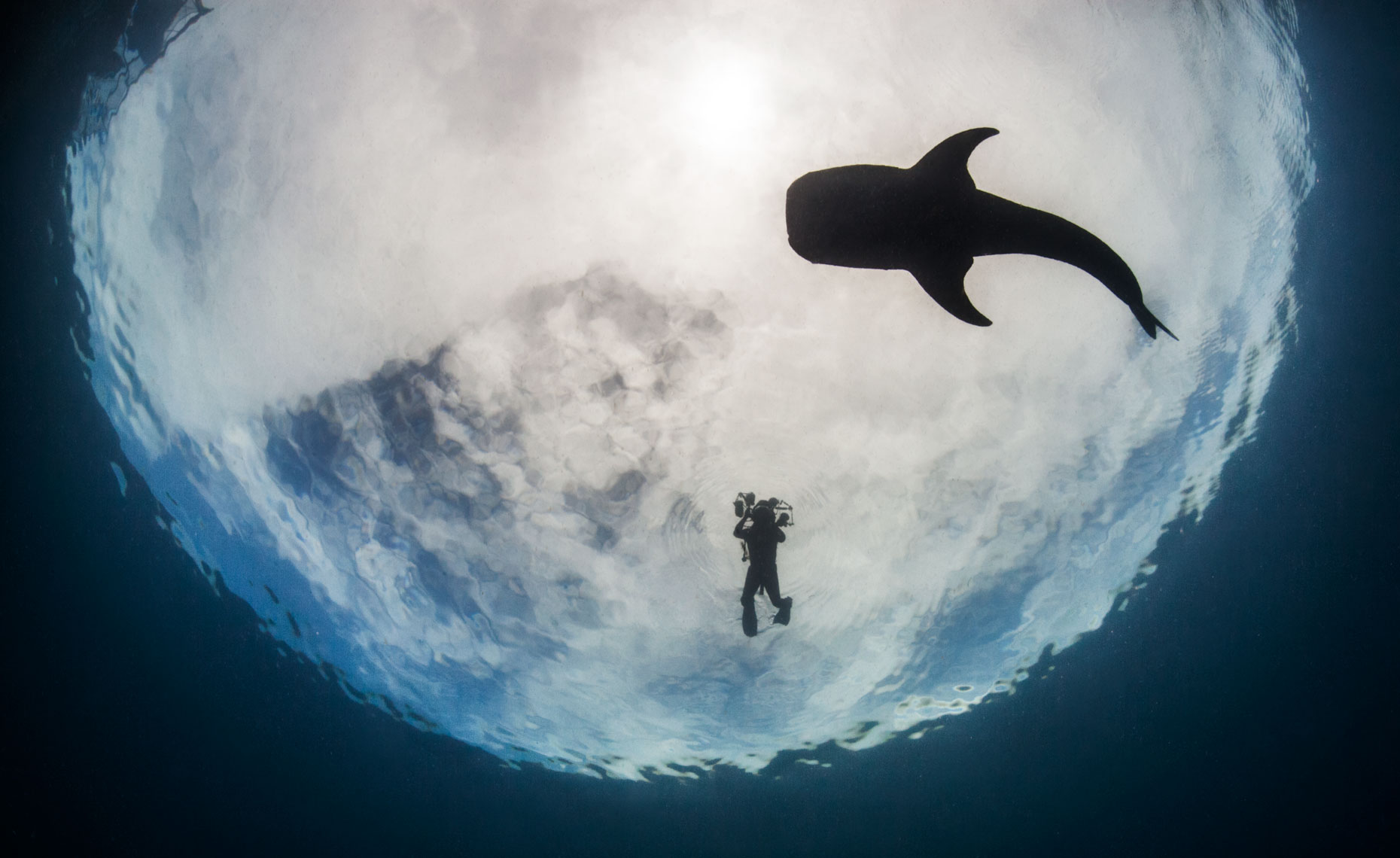 Whale-shark_and diver